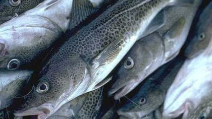 INVESTMENT: Niger Govt. Signs $3.25bn MoU with Firm on Fish farming