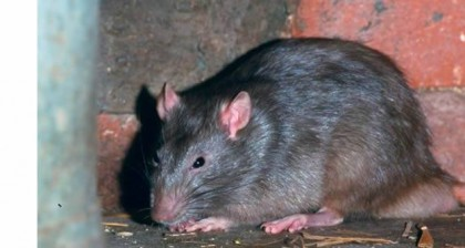 Lassa Fever: What Nigerians Are Advised To Know