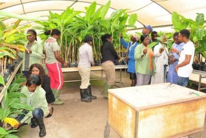 Bauchi FADAMA III Project Graduates 300 Agro-prenuers
