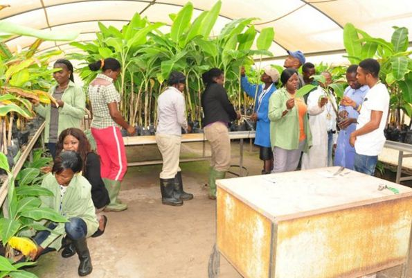 agric youths