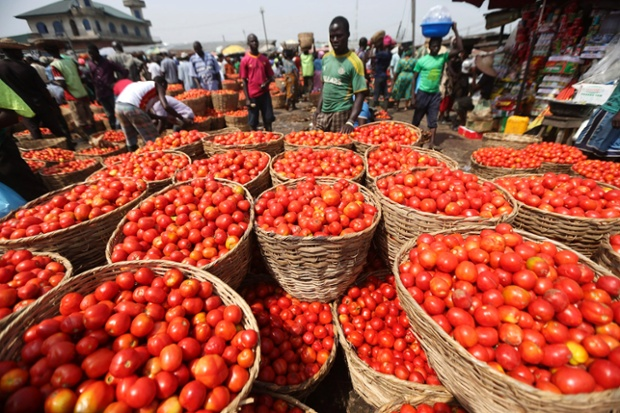 sample costs to produce processing tomatoes Growing and selling tomatoes can produce a nice income but only if you approach it as a business if you sell them without regard for what they cost you to produce.