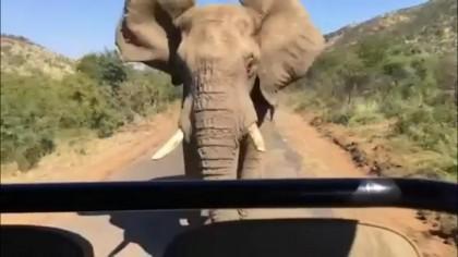 Arnod-elephant