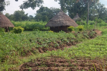 Benue moves to agriculture for economic development Growth
