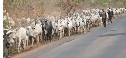 FCT Gets Committee To Tackle Grazing, Rustling