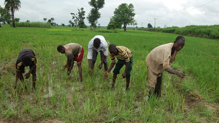 Farmers on the Fadama Project
