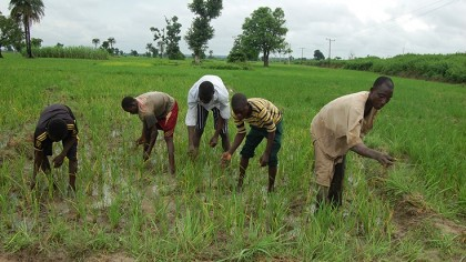 ng-fadama-takes-nigerian-farmers-to-higher-level-735x490