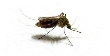 Mosquito-malaria-Outbreak