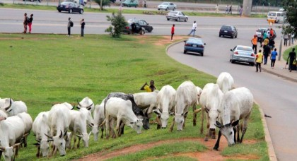 FCTA Asks Herdsmen to Move Cattle Out of Abuja City
