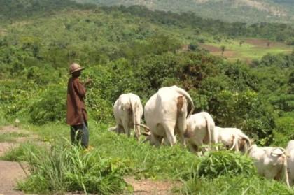 farmers-herdsmen