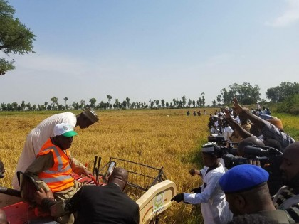 Kano State Launches This Year's Rice Harvest Programme