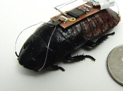 cockroach-biobots