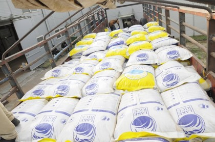 We Harvested Enough Rice That Can Feed Not Only Nigeria But Parts of  Africa
