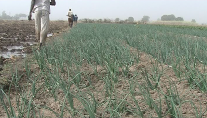 FG Targets 500 Hectares To Improve Irrigation By 2020
