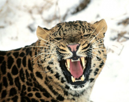 Wild Leopard Shuts Down International Airport