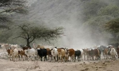 2 Cattle Rustlers Receive Death By Hanging Sentence In Kogi