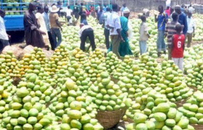 NEWS ANALYSIS: Carbide Ripened Fruits in Nigerian Markets