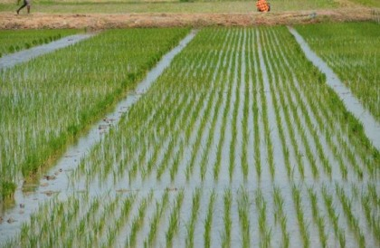 irrigation dam dries up