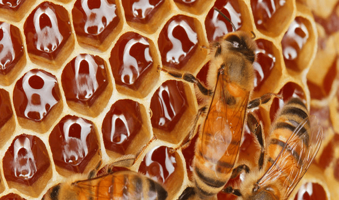 Nigeria Can Generate $10bn From Honey – USAID
