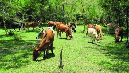 yobe-livestock-investment-potential