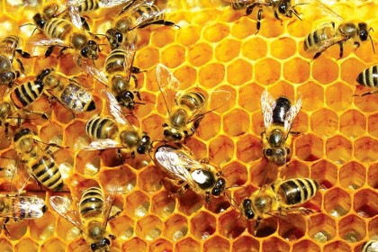 Why Nigeria Is Yet To Produce Enough Honey For Export – Ministry of Agriculture