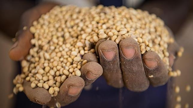world-bank-project-agriculture