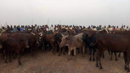 Troops Ambush Boko Haram IED Expert, Recovers Over 200 Cows in Baneri