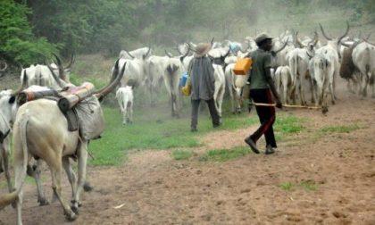 Open grazing: Benue court convicts 5 herdsmen