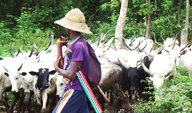 Herdsmen-farmers conflicts becoming more sophisticated, deadlier – UN envoy