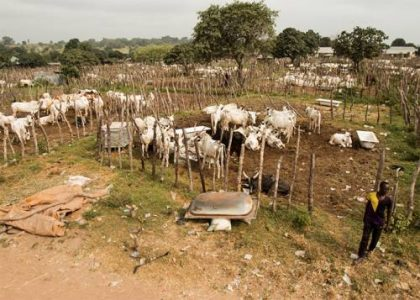 FG To Re-Construct Grazing Reserves – Ogbeh