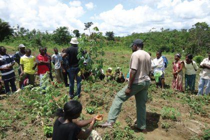 Farmers In Bwari Anticipate Bumper Harvest