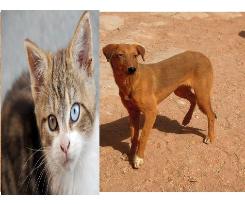 Ebonyi Govt. Mandates residents to Vaccinate Dogs, Cats Against Rabies