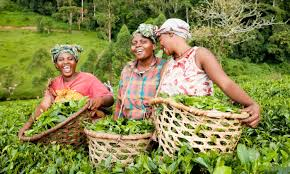 Women farmers to get farm inputs, equipment at subsidised rate- FG
