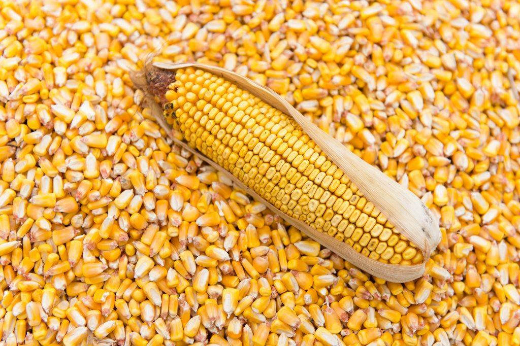 CBN Gives Directive to Ban Importation of Maize